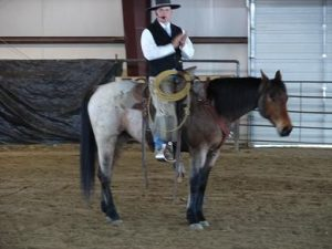 "Chris doing a ""at liberty"" demonstration at the Sapphire Event Center Horse Expo."